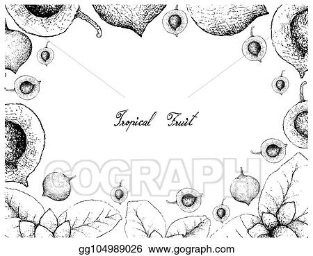 Vector Art - Hand drawn frame of false mangosteen and