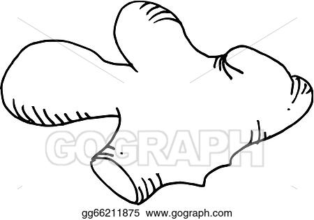 Hand Drawn Ginger Vector Gg66211875