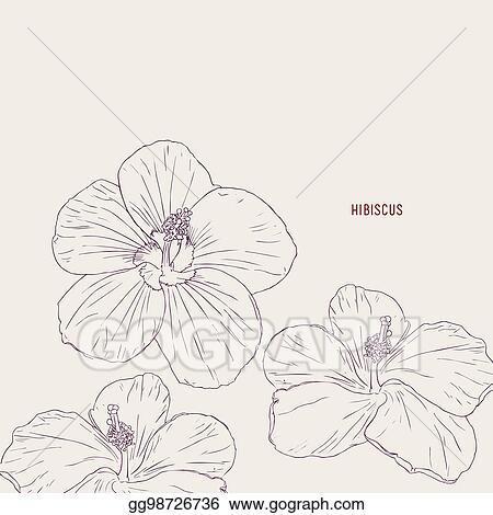 Vector Clipart Hawaiian Hibiscus Flowers Sketch Vector Vector
