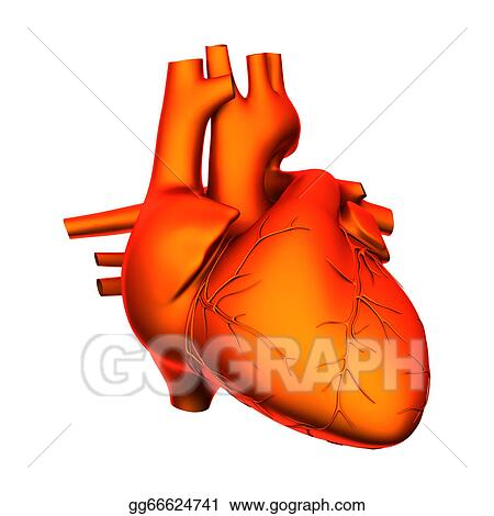 Clipart - Heart - internal organs - isolated . Stock Illustration ...