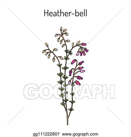 Name Heather Clipart, HD Png Download , Transparent Png Image - PNGitem