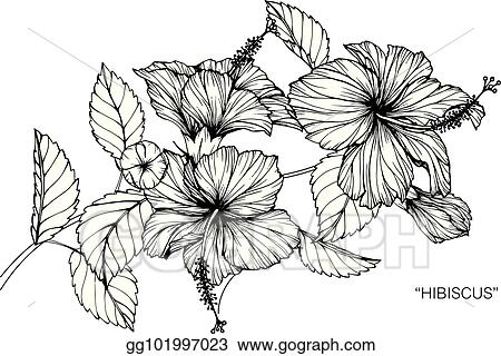 Eps Vector Hibiscus Flower Drawing And Sketch With Black And