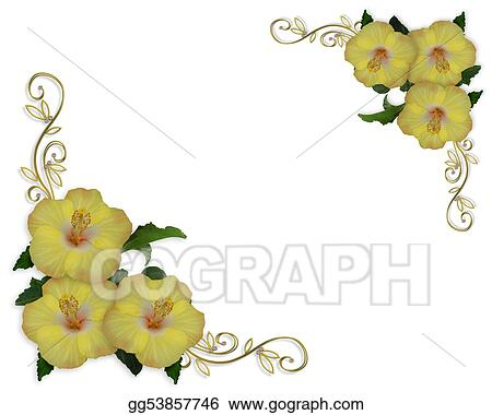Drawings Hibiscus Flowers Border Design Stock Illustration