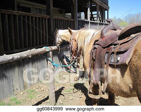 Stock Images - Horses tied to hitching posts  Stock
