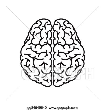 vector illustration human brain outline top view eps clipart gg84549640 gograph https www gograph com clipart license summary gg84549640