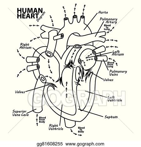 human body diagram tattoo vector illustration human heart diagram anatomy tattoo stock  human heart diagram anatomy tattoo