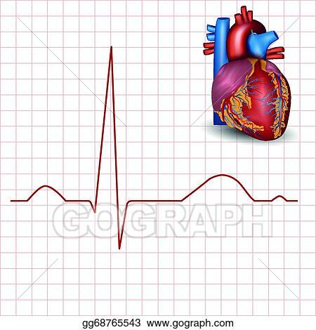 Vector Illustration - Human heart normal rhythm and heart anatomy ...