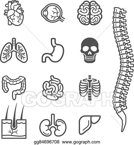 Vector Art - Human internal organs detailed icons set. . Clipart ...