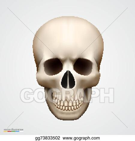 a1ca3701463 Vector Stock - Human skull isolated on white. Stock Clip Art ...