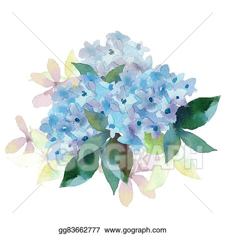 vector clipart illustration of hydrangea flowers vector rh gograph com hydrangea clipart borders clipart hydrangea images