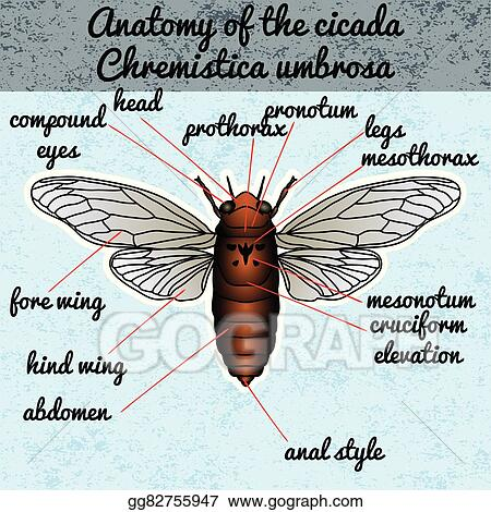 Magnificent Anatomy Of An Insect Crest