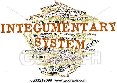 Drawings - Integumentary system. Stock Illustration gg63219099 - GoGraph