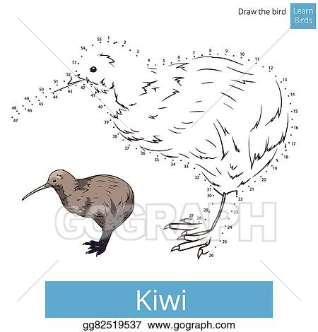 Vector Art Kiwi Bird Learn To Draw Vector Clipart Drawing