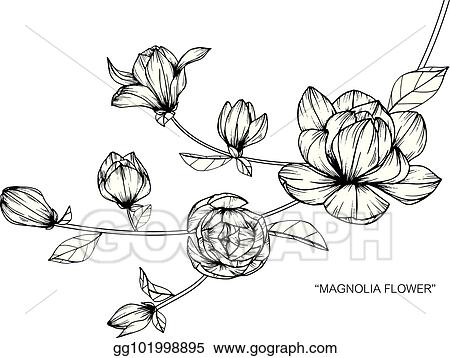 Eps Illustration Magnolia Flower Drawing And Sketch With Black