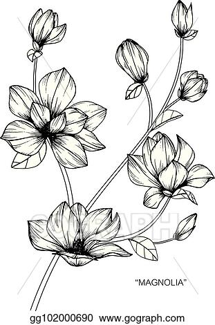Eps illustration magnolia flower drawing and sketch with black magnolia flower drawing and sketch with black and white line art mightylinksfo