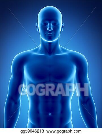 Drawing Male Figure In Anatomical Position Clipart Drawing Gg59046213 Gograph
