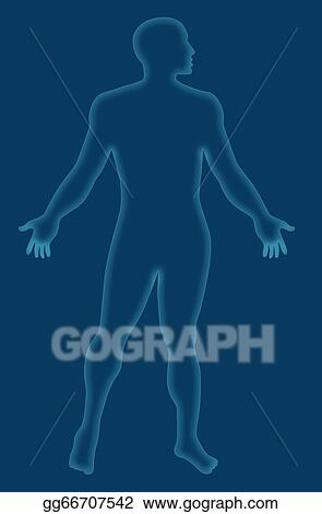 Stock Illustrations Male Human Anatomy Outline Blue Stock Clipart