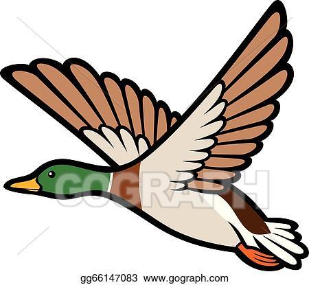vector art mallard duck flying clipart drawing gg66147083 gograph rh gograph com flying duck silhouette clip art Duck Silhouette Clip Art
