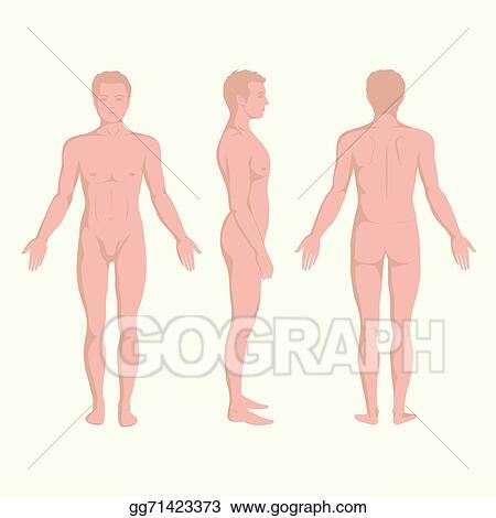 Vector Stock - Man body anatomy. Stock Clip Art gg71423373 - GoGraph