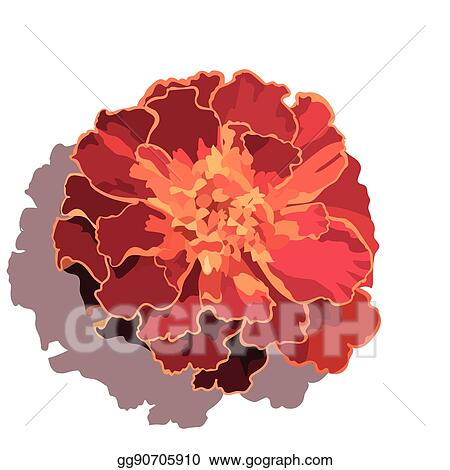 Vector clipart marigold flower isolated on white vector marigold flower isolated on white mightylinksfo