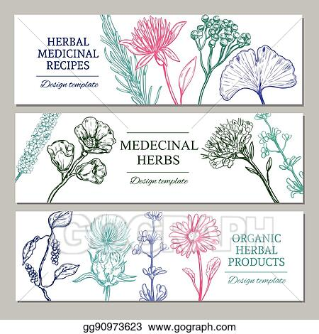 Vector Art Medicinal Herbs Horizontal Banners Eps Clipart Gg90973623 Gograph
