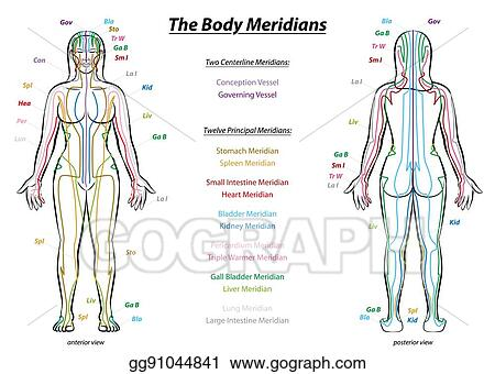 Vector Art Meridian System Description Chart Female Body Clipart