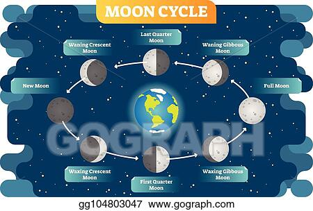 Swell Eps Vector Moon Phase Cycle Vector Illustration Diagram Poster Wiring Digital Resources Instshebarightsorg