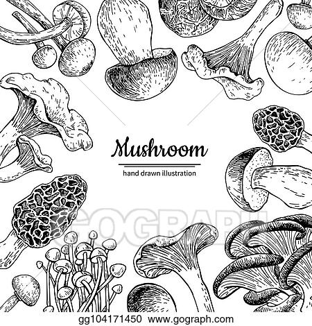 Vector Stock - Mushroom hand drawn vector frame. isolated sketch ...