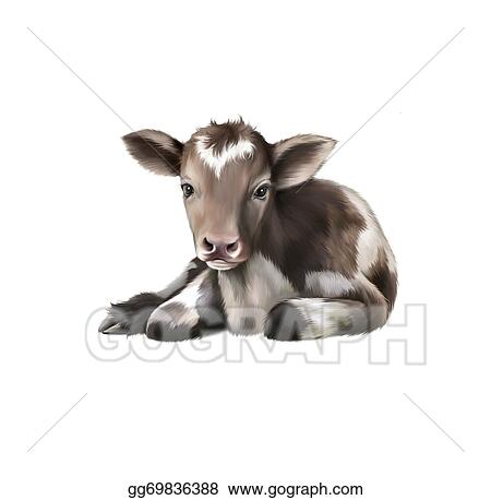 Stock Illustration Newborn Calf Black And White Baby Cow Clipart