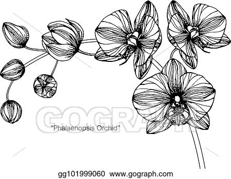 Vector illustration orchids flower drawing and sketch with black orchids flower drawing and sketch with black and white line art mightylinksfo