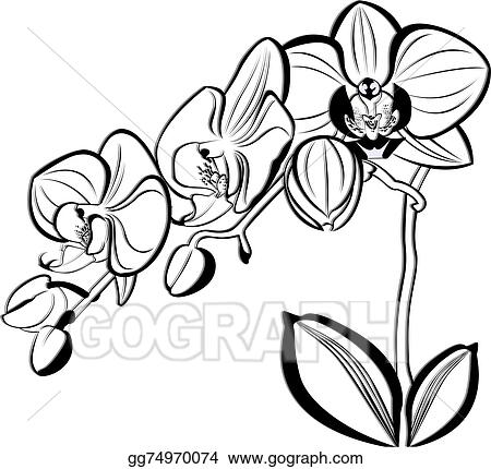Stock Illustration - Orchids. Clipart Illustrations ...