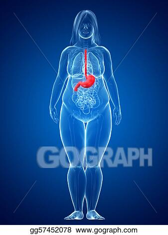 Stock Illustration Overweight Female Stomach Clipart Gg57452078
