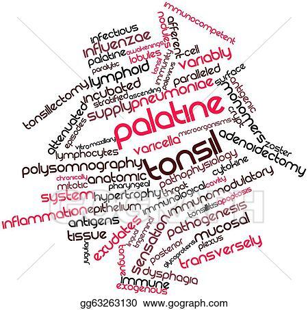 Clipart - Palatine tonsil. Stock Illustration gg63263130 - GoGraph