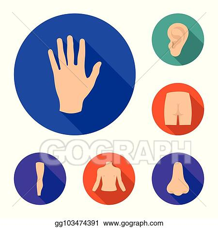 vector art part of the body limb flat icons in set collection for design human anatomy vector symbol stock web illustration eps clipart gg103474391 gograph gograph