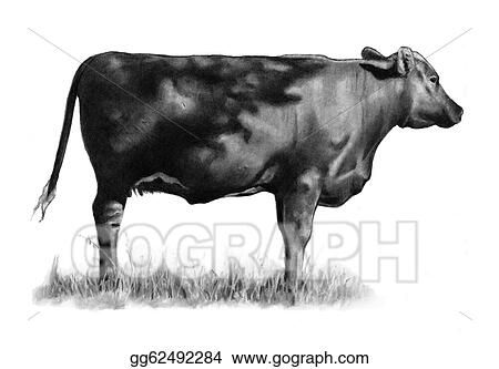 Pencil Drawing Of Cow Standing