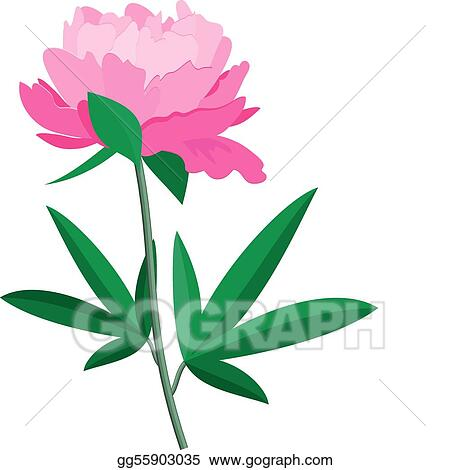 vector art peony clipart drawing gg55903035 gograph rh gograph com peony clipart png clipart peony flower