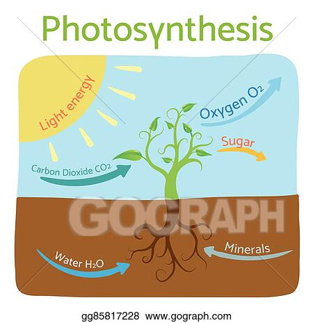 Vector Illustration Photosynthesis Diagram Schematic Vector