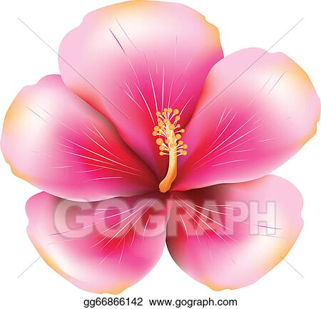 Vector Art Pink Hibiscus Clipart Drawing Gg66866142 Gograph