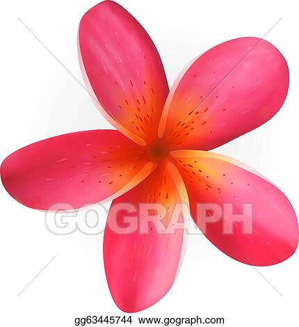 vector stock pink plumeria flower isolated on white clipart rh gograph com white plumeria clip art plumeria flower clip art