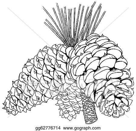 pine cones color books vector art plant pinus ponderosa clipart drawing gg62776714