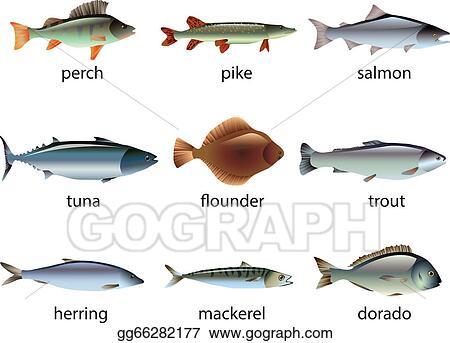 Fisch Saisonkalender Ostsee