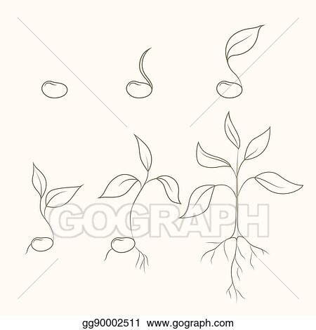 vector stock process of kidney bean plant evolution and growth
