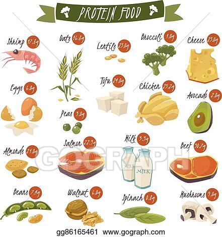 Vector Clipart Protein Rich Food Flat Icons Set Vector