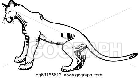 vector clipart puma vector illustration gg68165613 gograph rh gograph com mountain lion mascot clipart mountain lion clipart black and white
