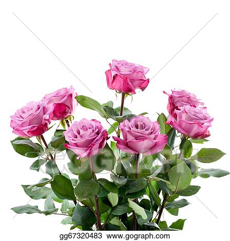 Stock Photo Purple Roses Bouquet On A White Background Stock