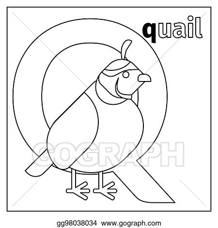 Vector Stock Quail Letter Q Coloring Page Stock Clip Art