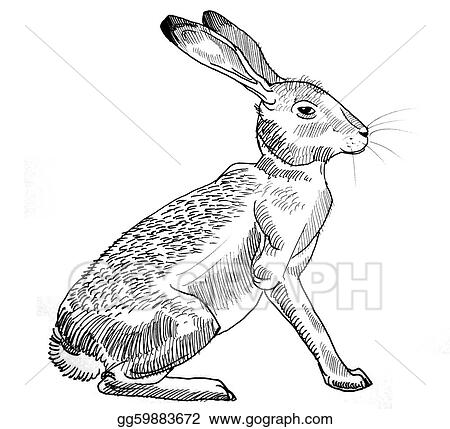 drawings rabbit sitting stock illustration gg59883672 gograph