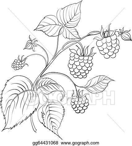 Vector Art - Raspberry branch. Clipart Drawing gg64431068 ...