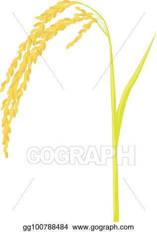 vector art rice plant vector design clipart drawing gg100788484 gograph vector art rice plant vector design