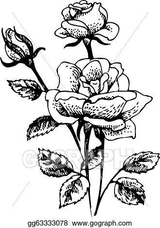 Vector Art Roses Hand Drawn Illustration Of Rose Flowers Bouquet
